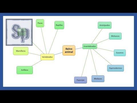 Cómo hacer un cuadro sinóptico en PowerPoint from YouTube · Duration:  12 minutes 51 seconds
