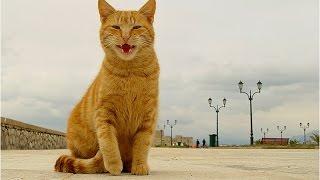 Смешное видео про котов и кошек. Самые смешные коты и кошки 2015. Funny cats 2015.