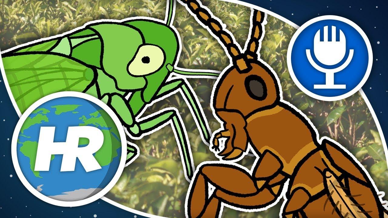 népi gyógyszer a májban élő paraziták ellen