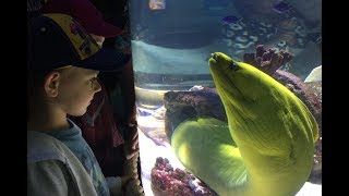 Дениска в Аквариуме. Мурены, медузы, крабы, рыбы и морские звёзды.