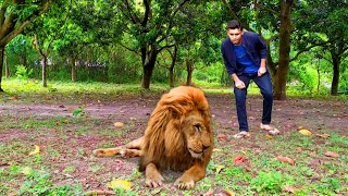 Green Screen Lion Funny Video By-NH Nahid