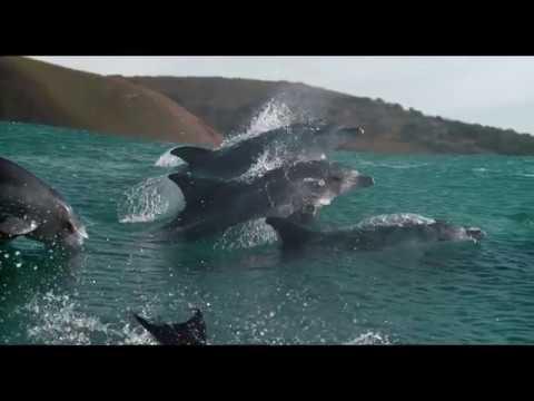 Oceans: Our Blue Planet - Trailer
