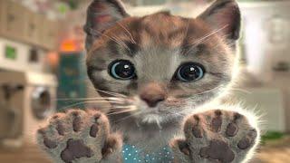 Gatitos - Gatito se disfraza de leon