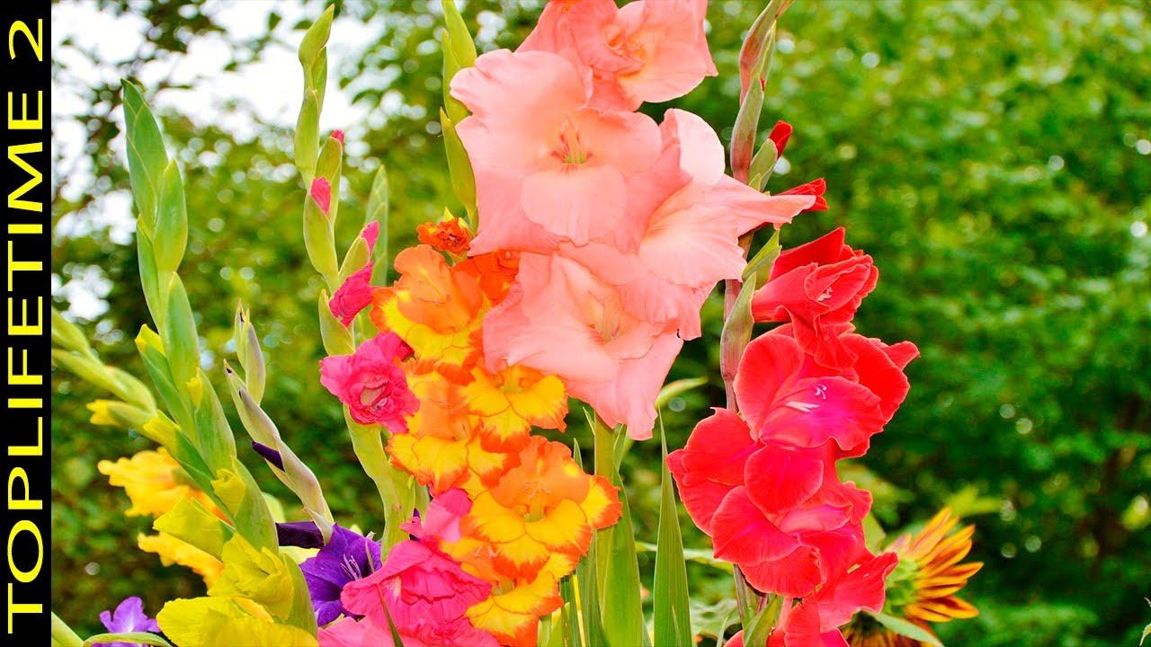 Download 20 Flores Más Bellas Del Mundo y su Increíble Significado