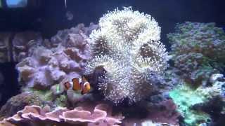 Магазин аквариумов и рыбок - 1 ЦЕНЫ в Америке / Наш Сан Диего(, 2014-10-30T02:59:03.000Z)