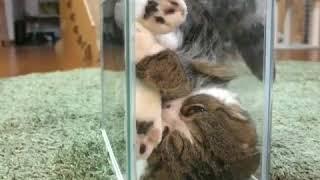 En Komik Kedi Videoları 2020