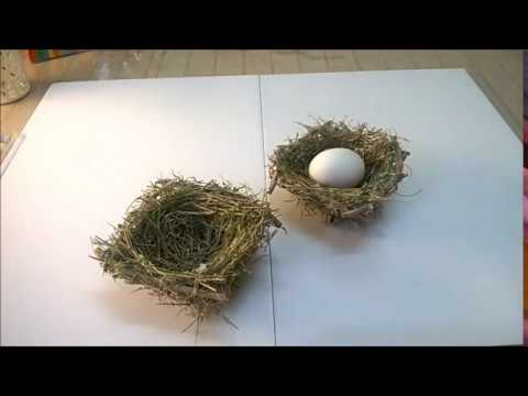 How to make a bird's nest - DIY  /  कैसे बनाये आसान चिड़िया का घोंसला