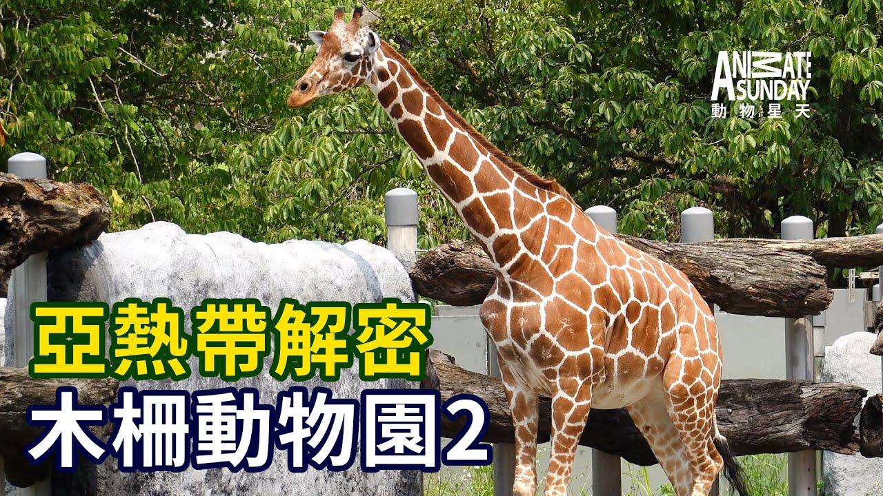 動物星天頻道《亞熱帶解密:木柵動物園2》搶先看 [4K]