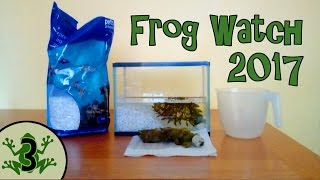 Video Frog Watch 2017 - How To Look After Tadpoles And Frogs - Setting Up An Aquarium [3] download MP3, 3GP, MP4, WEBM, AVI, FLV Agustus 2018