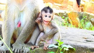 Janet Very Healthy Right Now, Very Lucky Adorable Monkey Baby!