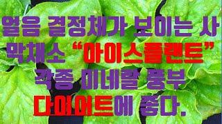 """다이어트에 좋다는 사막채소""""아이스플랜트"""""""