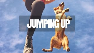 How To Stop Your Dog From Jumping Up
