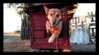 Собачья будка в японском стиле | Реакция собакена на новое жильё