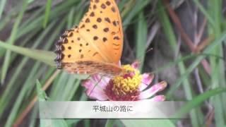 平城山 井原義則 2012