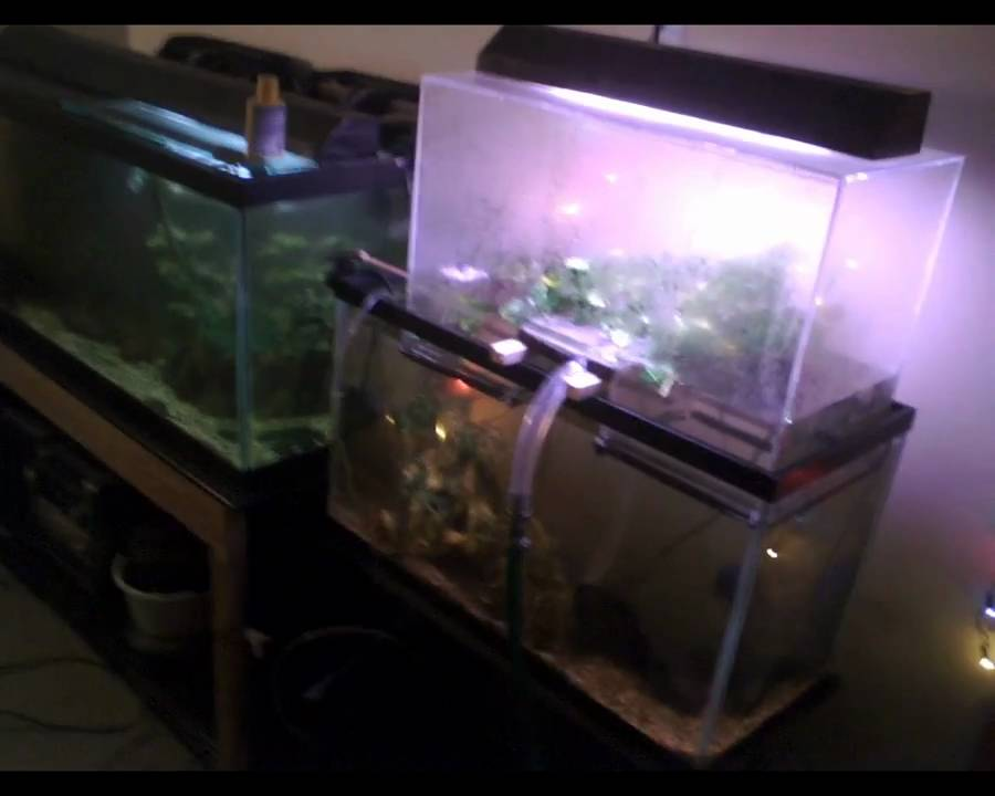 Crazy Aquarium Terrarium Setup Multi Tank Overflow And Expander