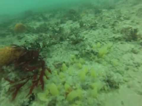 Jason Jetton scuba diving Port Elizabeth, South Africa