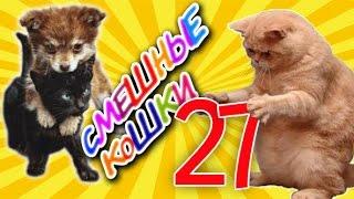 Смешные кошки 27 ● Приколы с животными 2015 ●  Funny cats vine compilation - Part 27
