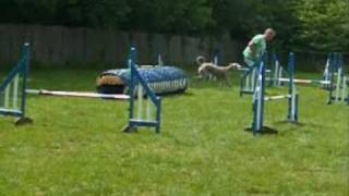 George And Friends At K9 Agility
