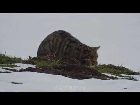 Imágenes de la fauna leonesa