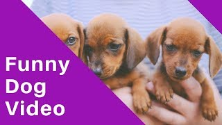 Funny Dog Video 2019 - Dog Attacked Woman/Get Ready for LAUGHING SUPER HARD