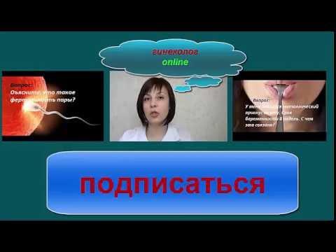 Женская репродуктивная система Википедия