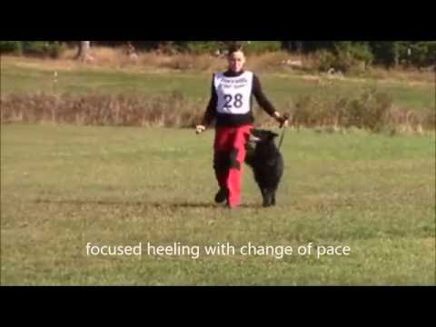 Olga Baram Obedience Routine with her Belgian Groenendael in Maine