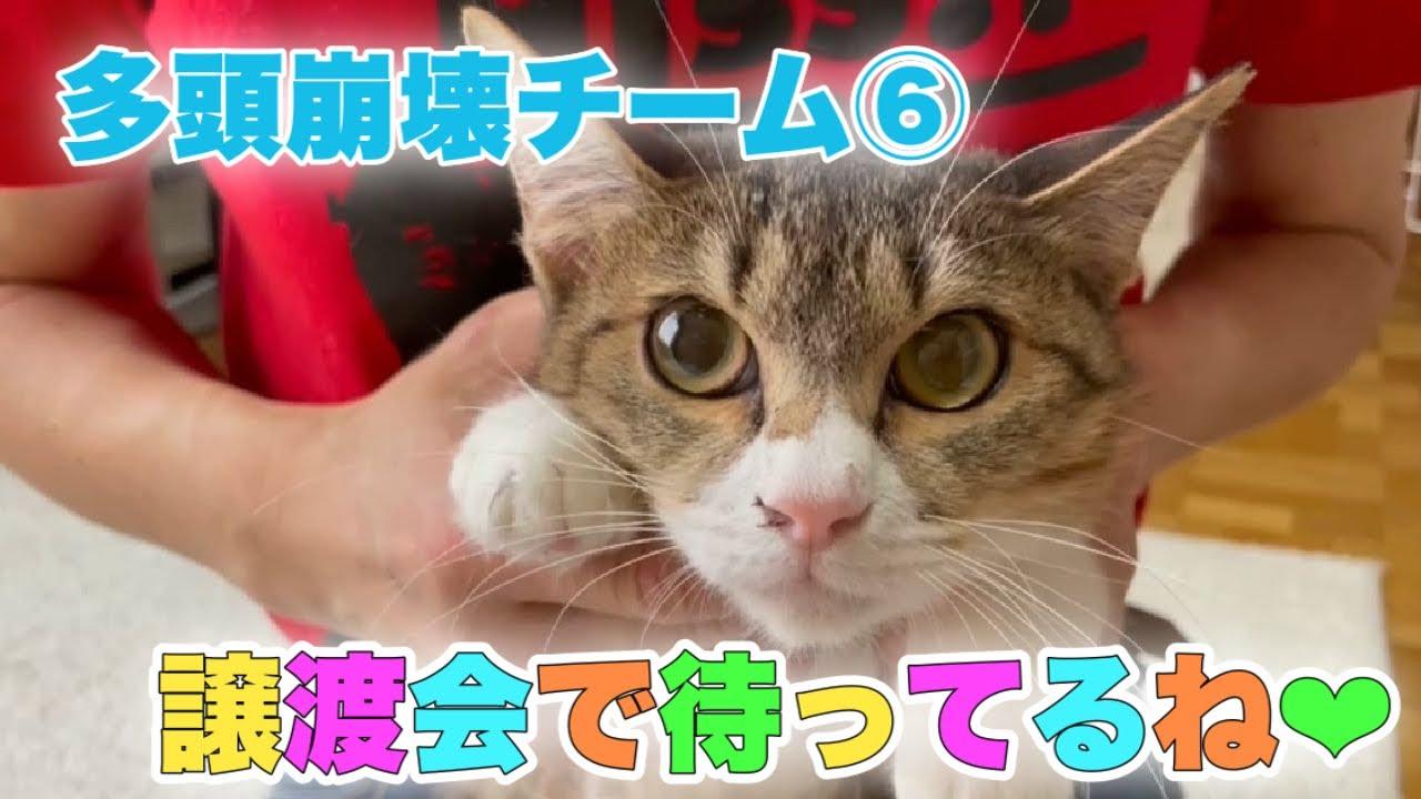 いざ!譲渡会に出場予定の多頭崩壊チーム⑥【Rescued cats】