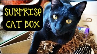 SURPRISE CAT BOX UNBOXING!