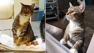 Умный кот устроил побег из приюта, освободив других животных