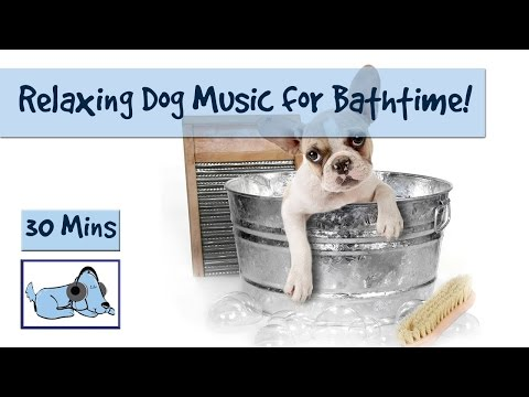 Bathtime Music for Dogs! Music to Calm Your Dog During Grooming and Bathing! 🐶 #GROOM08