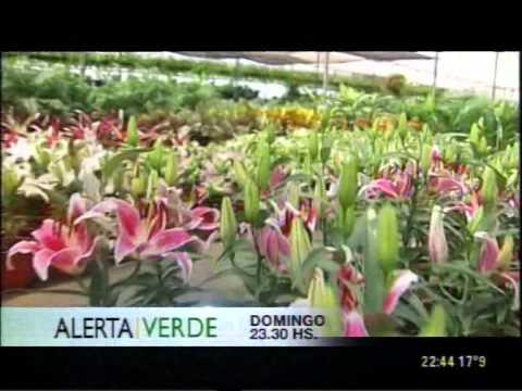 C5N - PROGRAMACION: ADELANTO DE ALERTA VERDE
