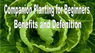 Companion planting - Definition and Benefits