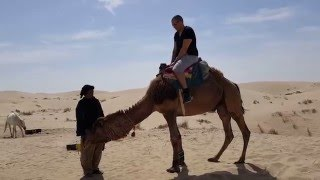 Falling off a camel head first. thumbnail