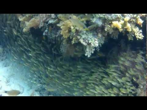 Ägypten Kempinski Soma Bay Schnorcheln am Korallenriff im Roten Meerиз YouTube · Длительность: 4 мин29 с