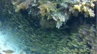 HD Schöne Fische und Korallen im Roten Meer, Hurghada, Egypt atemberaubend (GoPro HD Hero 2)