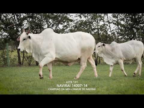 LOTE 131   CSCN 14007