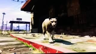 Жизнь животных в ГТА 5 играю за пуму