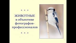 Автор ролика Виталий Тищенко (Ростов-н/Д). Животные  в объективе фотографов-профессионалов