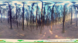 Pine forests of Vagamon | 360° video