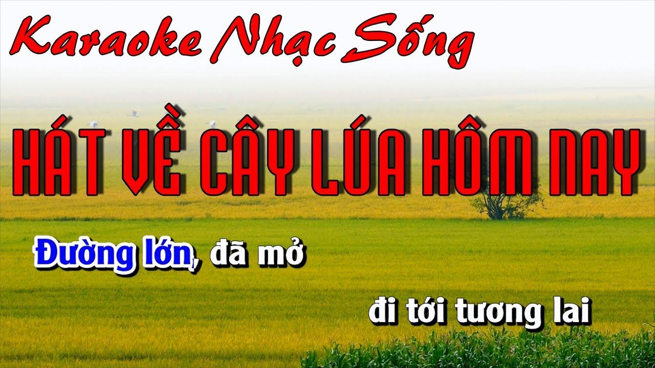 Hát Về Cây Lúa Hôm Nay – Karaoke Nhạc Sống – Beat chất lượng cao