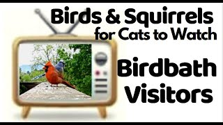 Video of Birds for Cats - 1 Hour of Birds for Cats, Birdbath Fun