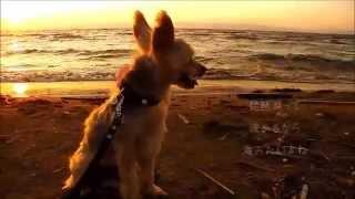 琵琶湖東岸にある松原水泳場でまっかな夕日を見てきたの。 琵琶湖さんは...