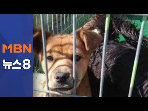 """동물보호단체 """"안락사는 필요해""""…다른 센터 실태는 [뉴스8]"""