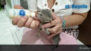 Gattini abbandonati a Londa salvati da una volontaria