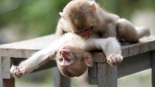 غرائب الحيوانات في التزاوج - Strange animals in mating