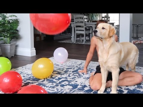DOGS REACT TO SEEING BALLOONS FOR THE FIRST TIME!