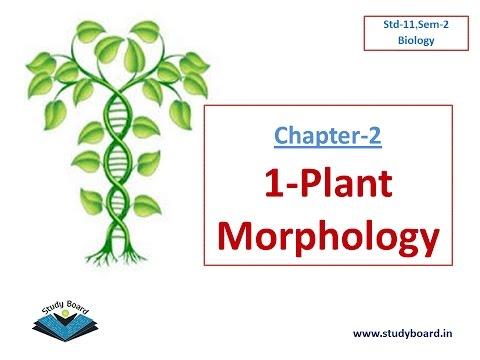 1 Plant Morphology