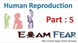 Biology Human Reproduction part 5 (Female Reproductive System: uterus, cervix, vagina) class 12 XII