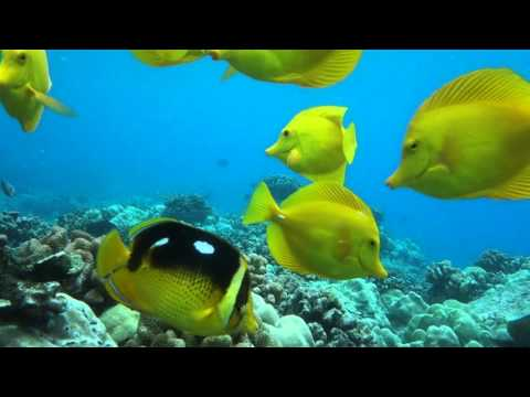12 min Tropical Reef and Fish Aquarium View, Kona, Hawaii