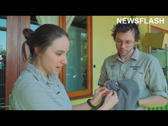 Aussie Vets Save Bird Of Prey That They Took In After Finding It Severely Injured